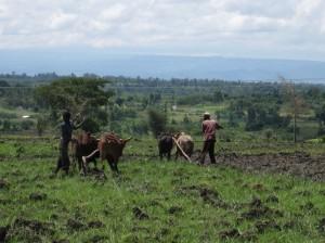 2010・8・13~アフリカ、エチオピア&ルワンダの旅(前納撮影) 463
